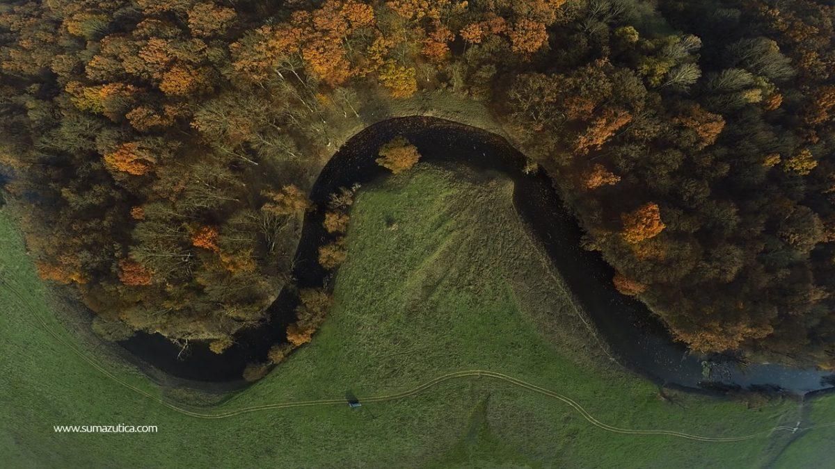 Šuma Žutica
