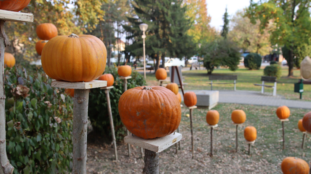 bucijada pumpkin